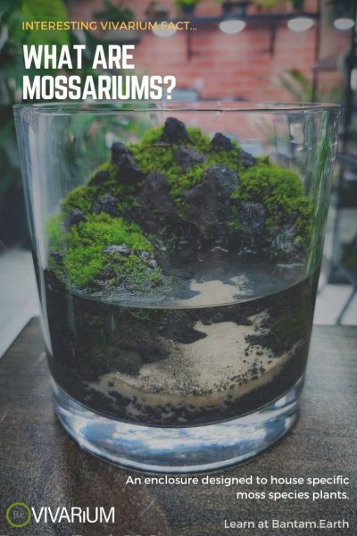 What is a Mossarium?