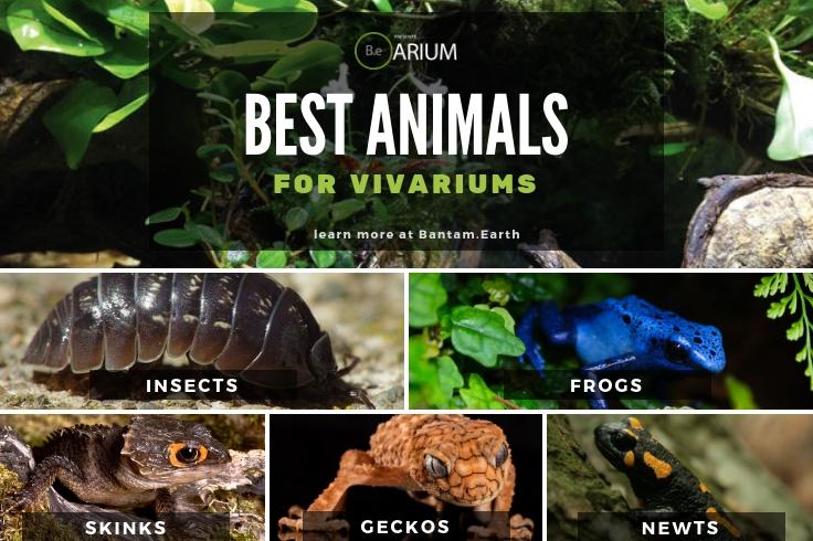 best animals for vivariums