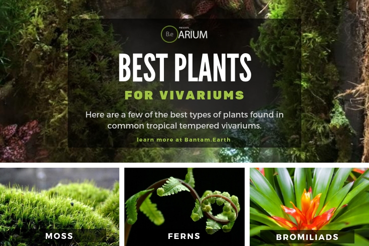 best plants for vivariums