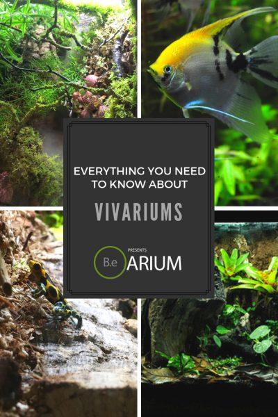 Vivarium care guide