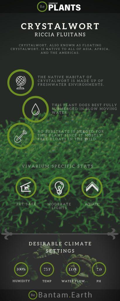 Crystalwort Riccia Fluitans care guide