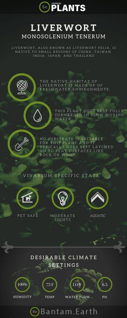 Liverwort Monosolenium Tenerum care guide