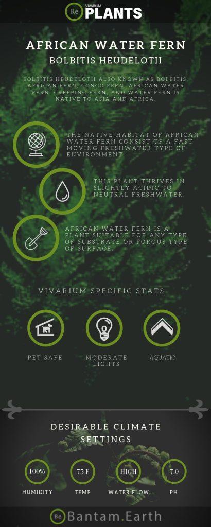African Water Fern (Bolbitis Heudelotii) Care Guide