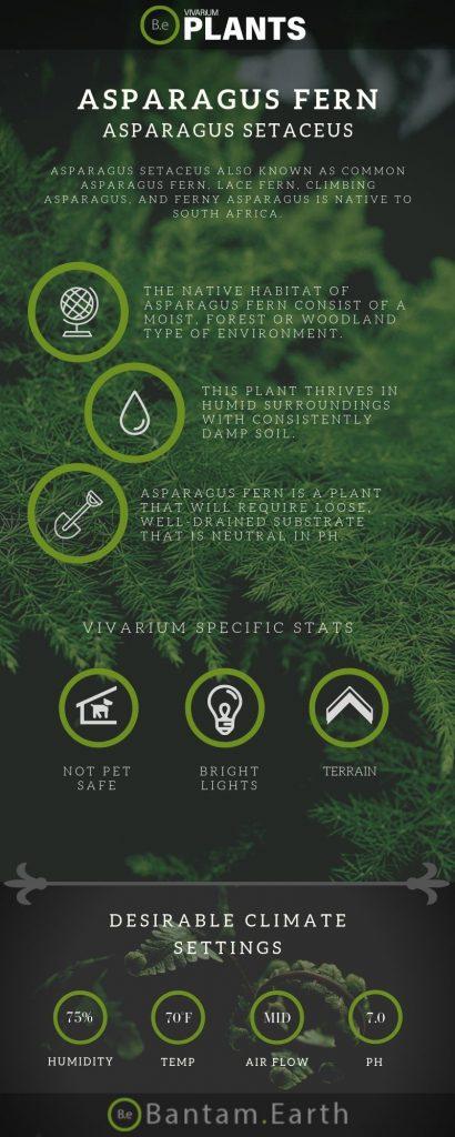 Asparagus Fern (Asparagus Setaceus) Care Guide