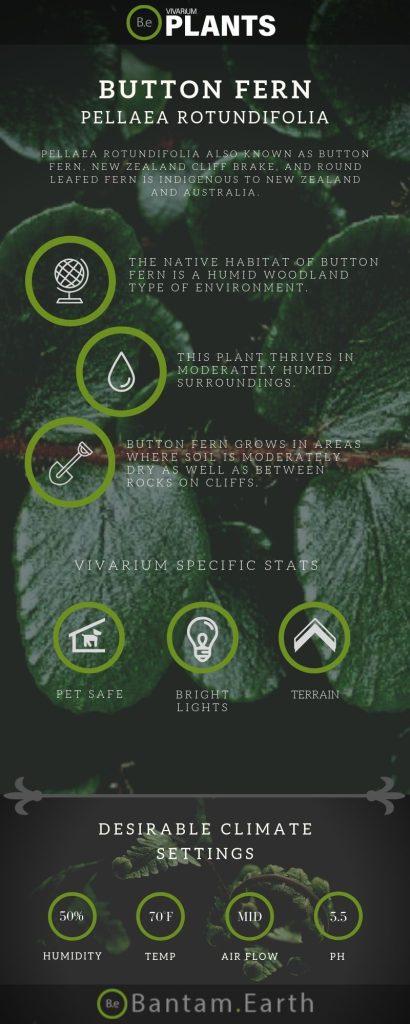 Button Fern (Pellaea Rotundifolia) Care Guide