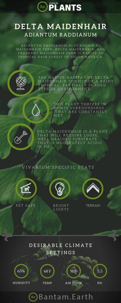 Delta Maidenhair Fern (Adiantum Raddianum) Care Guide