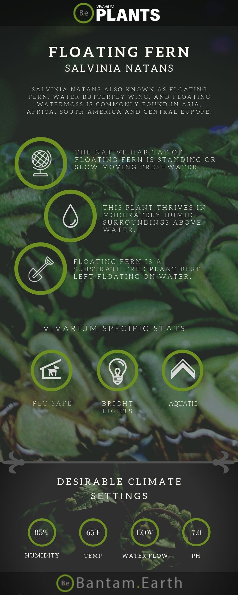 Floating Fern (Salvinia Natans) Care Guide