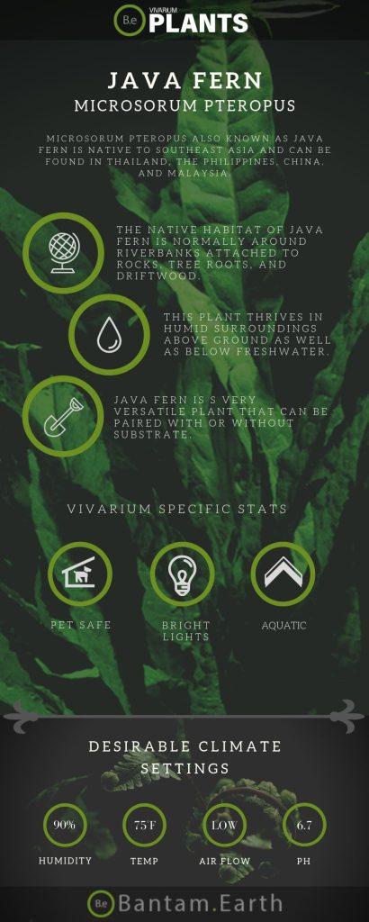 Java Fern (Microsorum Pteropus) Care Guide