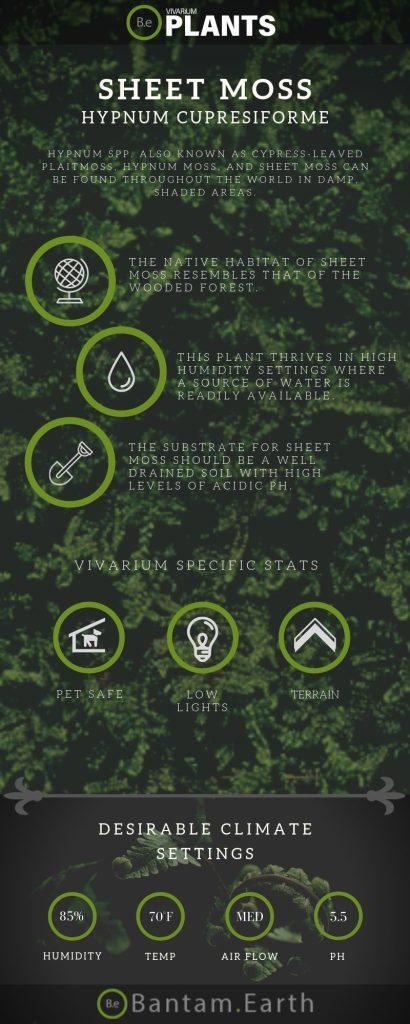 Sheet Moss (Hypnum Cupresiforme) care guide