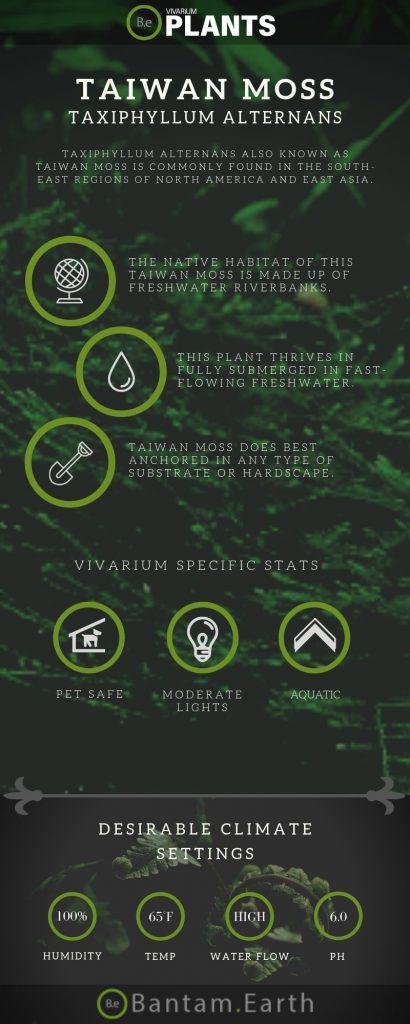 Taiwan Moss (Taxiphyllum Alternans) care guide