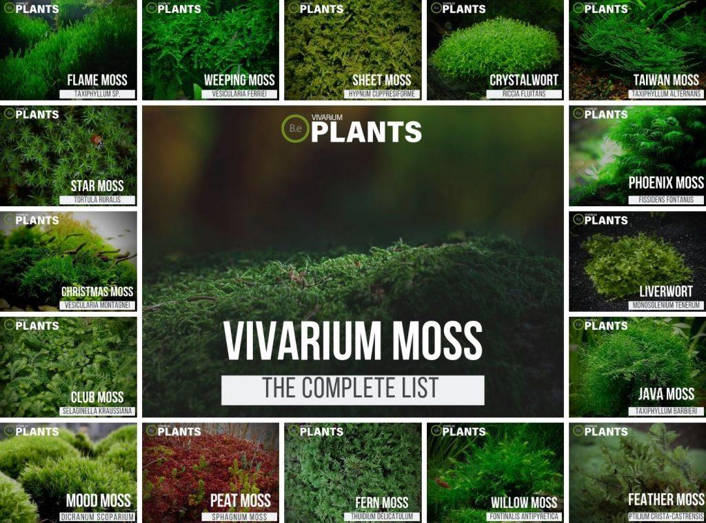 Complete List Of Vivarium Moss Care Guide Tips Bantam Earth