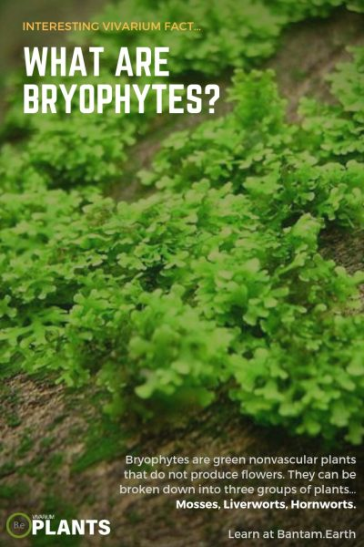 What Are Bryophytes?