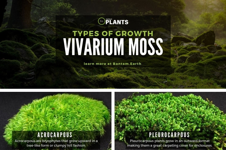 difference between AcrocarpousandPleurocarpous moss