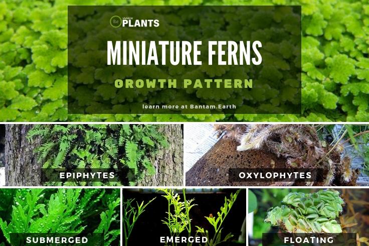 Different ways that ferns grow