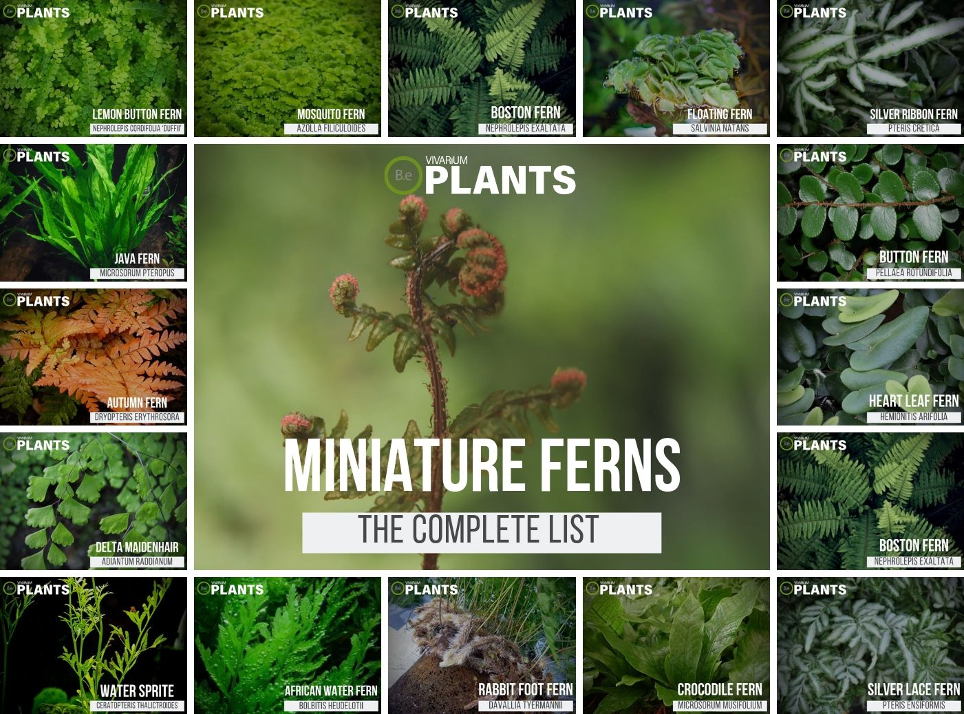 Types of miniature fern