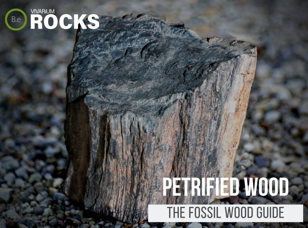 "Petrified Wood ""Fossil Wood"" Hardscape Guide"