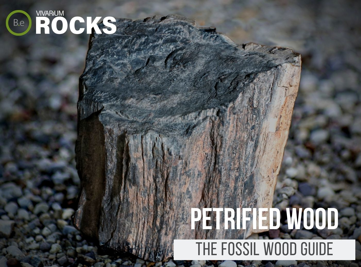 "Petrified Wood ""Fossil Wood"" Hardscape Guide"