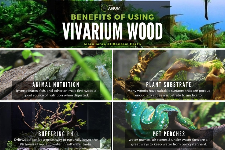 Benefits To Using Vivarium Wood