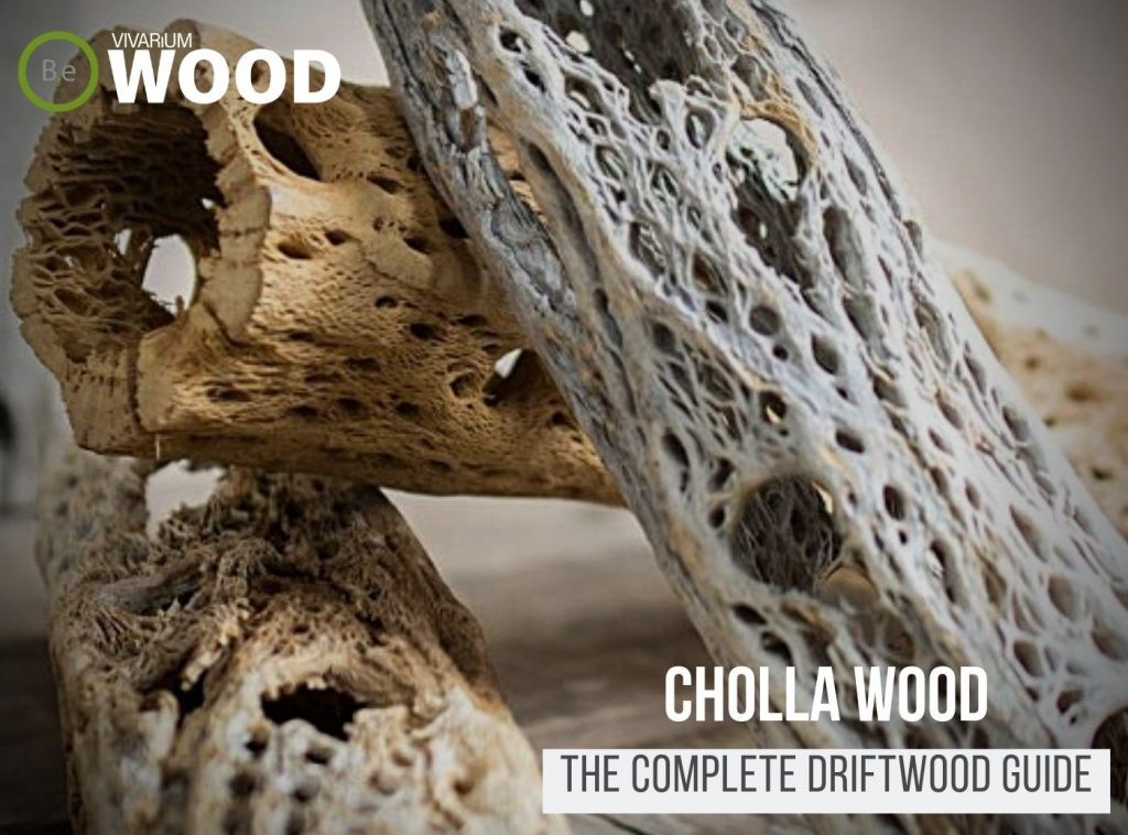 """Cacti Driftwood """"Cholla Wood"""" - The Hardscape Guide"""