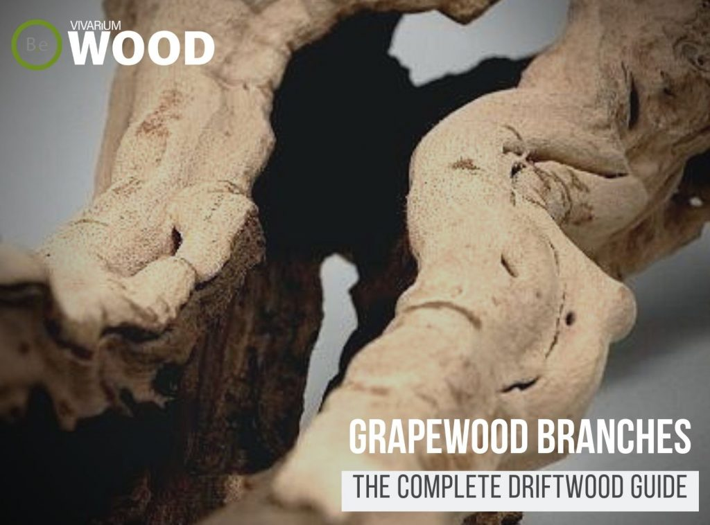 "Grapewood Branches ""Grapevine"" - The Driftwood Guide"