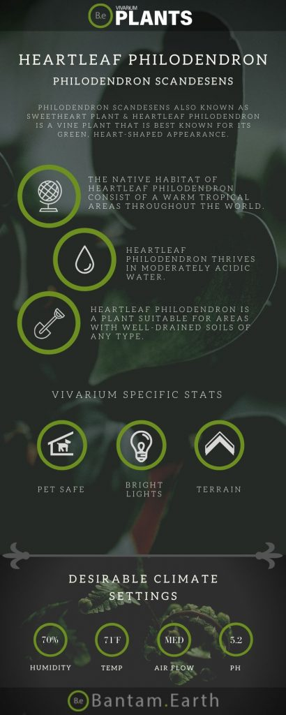Heartleaf Philodendron (Philodendron Scandesens) Care Guide