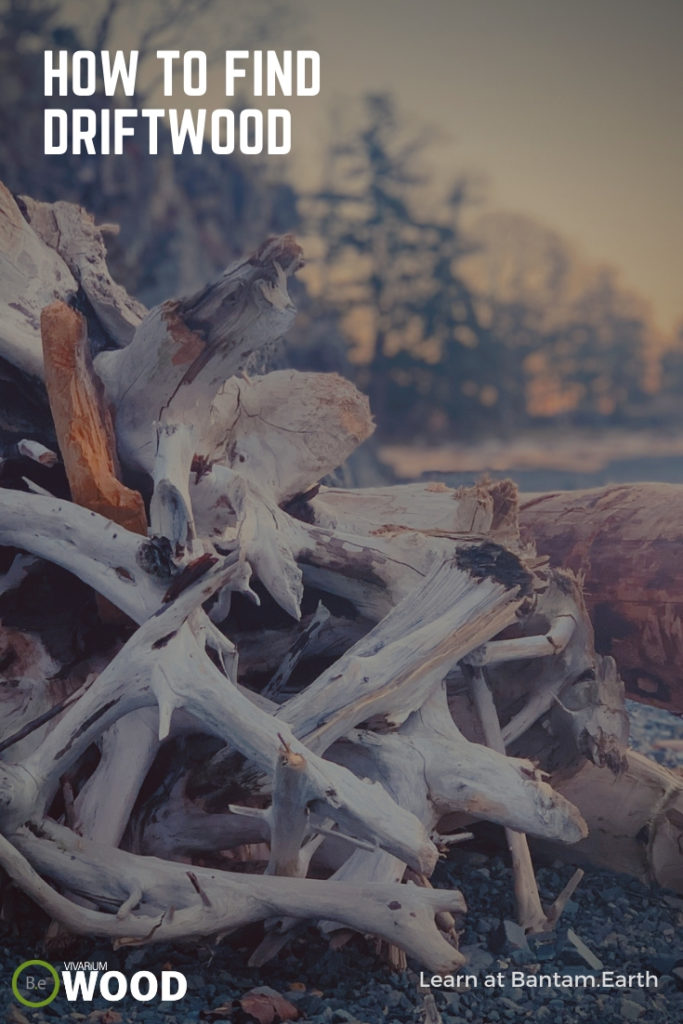How To Find Driftwood