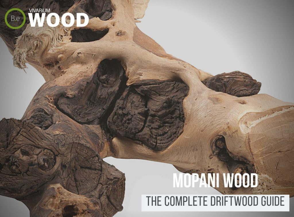 "Gnarly Driftwood ""Mopani Wood"" - The Hardscape Guide"