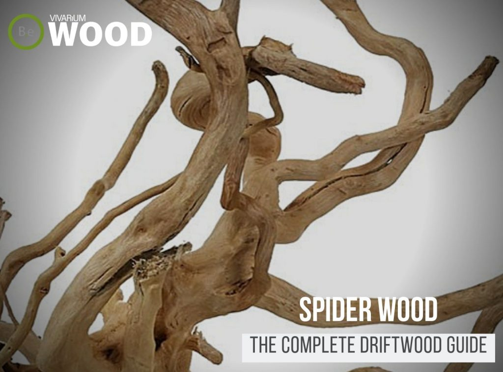 "Azalea Roots ""Spider Wood"" - The Hardscape Guide"