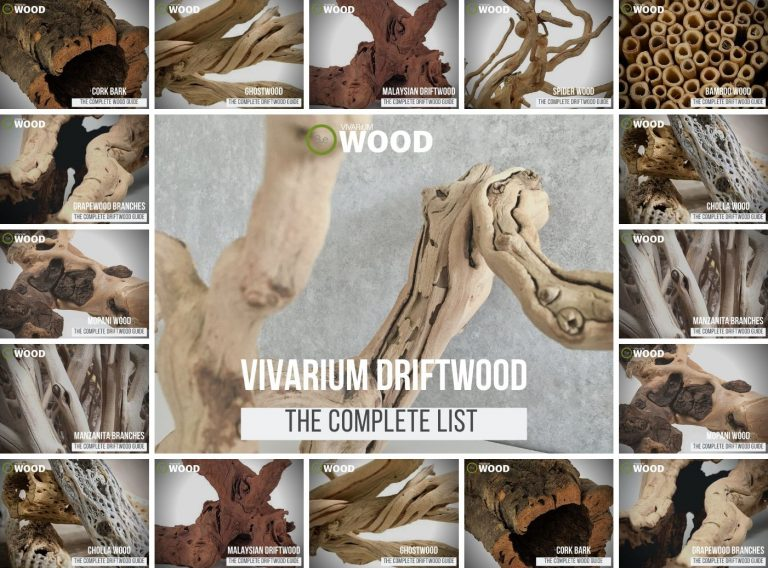 The Complete List Of Vivarium Wood & Driftwood