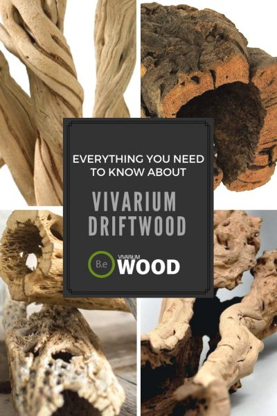 The Vivarium Wood & Driftwood Guide