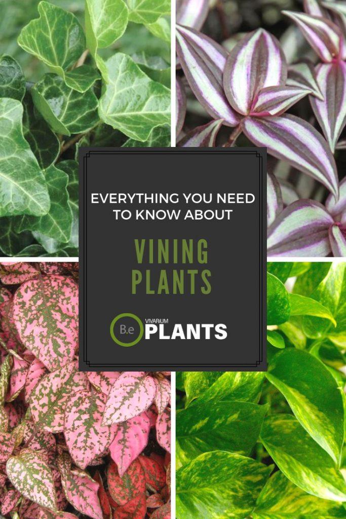 Climbing & Trailing Plants