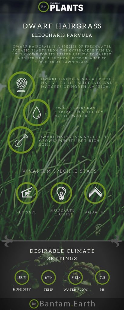 Dwarf Hairgrass (Eleocharis Parvula) Care Guide