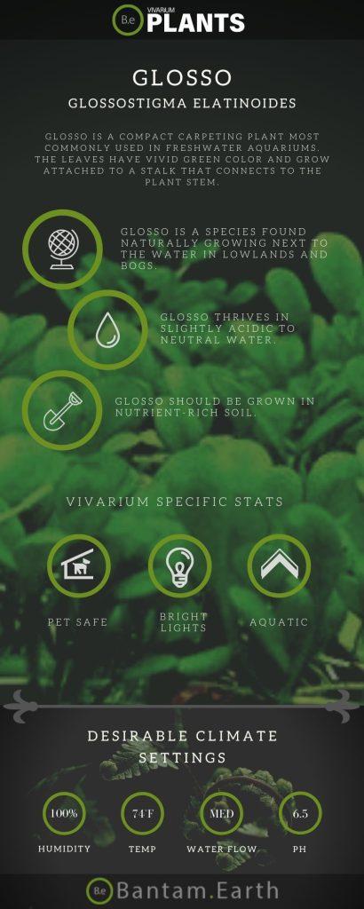 Glosso Plant (Glossostigma Elatinoides) Care Guide
