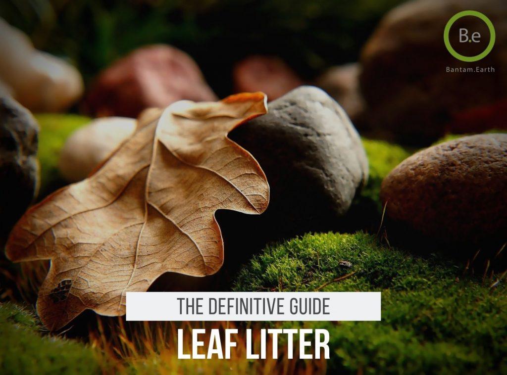 Vivarium Leaf Litter Guide
