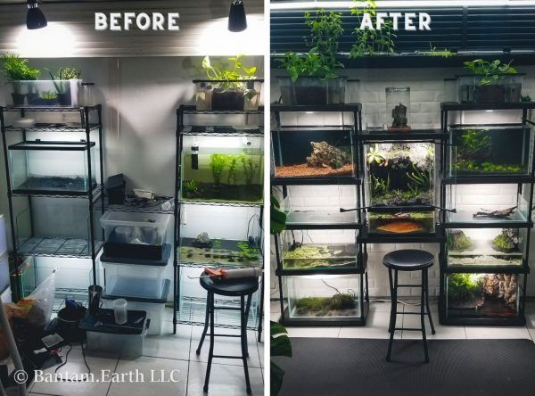 DIY Aquarium Rack (Before & After)