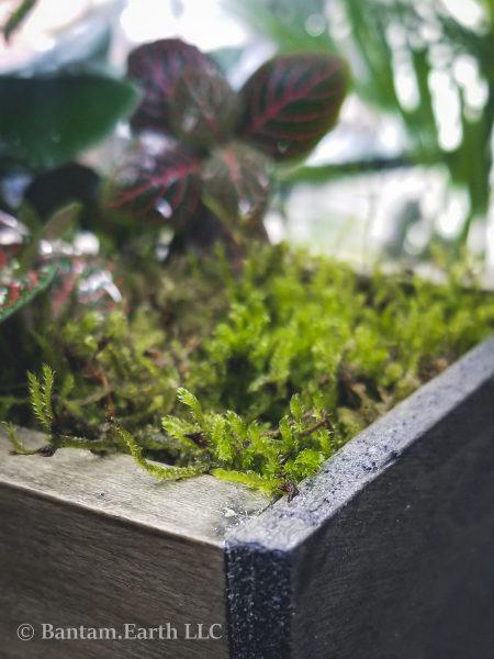 Open top terrarium box