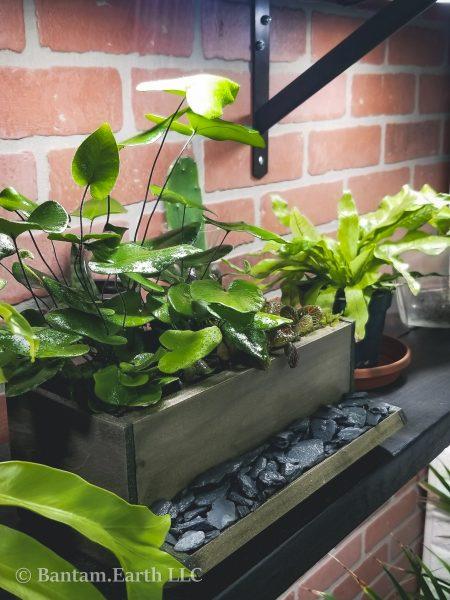 Mini Indoor Planter Box