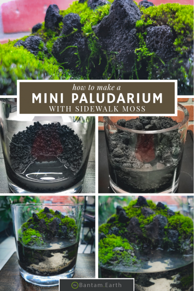 DIY Mini Paludarium With Outdoor Moss