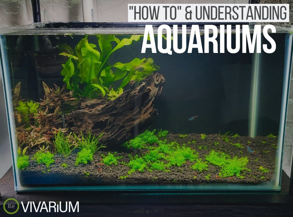 Aquarium: Everything You Need To Know