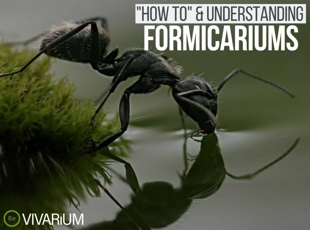 Formicarium: Everything You Need To Know