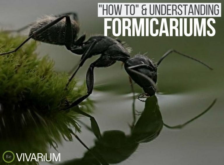 """Formicariums """"how to"""" & care guide tips"""