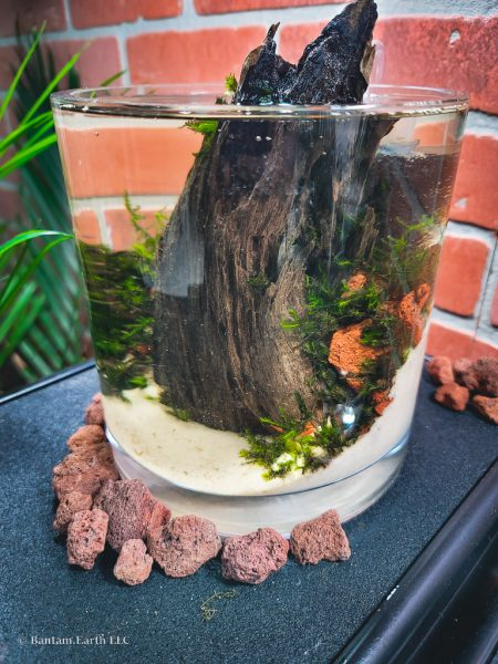 Mini Aquascape With Scrap Material