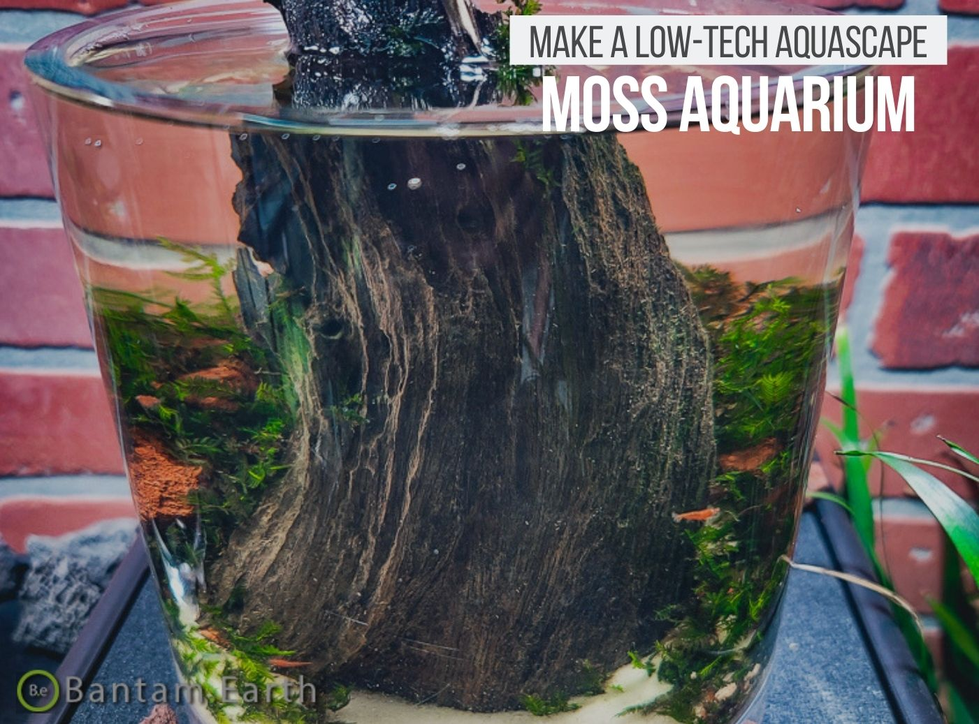 Mini Aquascape with moss