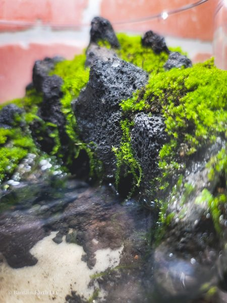 Aquaterrarium with java moss & barbula moss