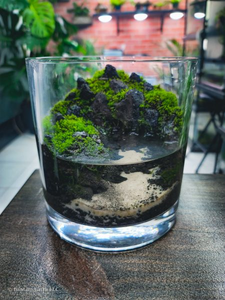 Mini Paludarium/aquaterrarium