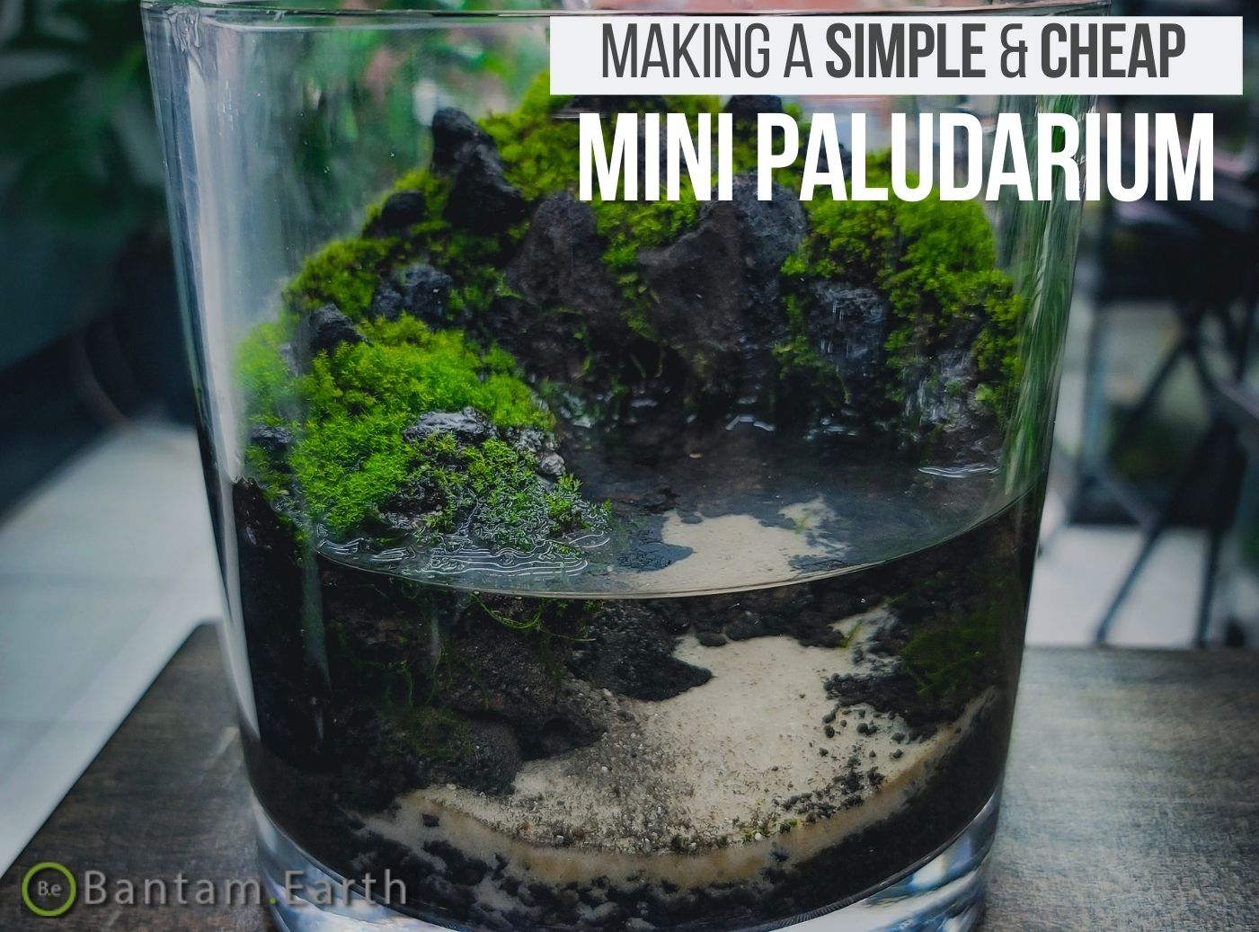 Mini Paludarium With Moss
