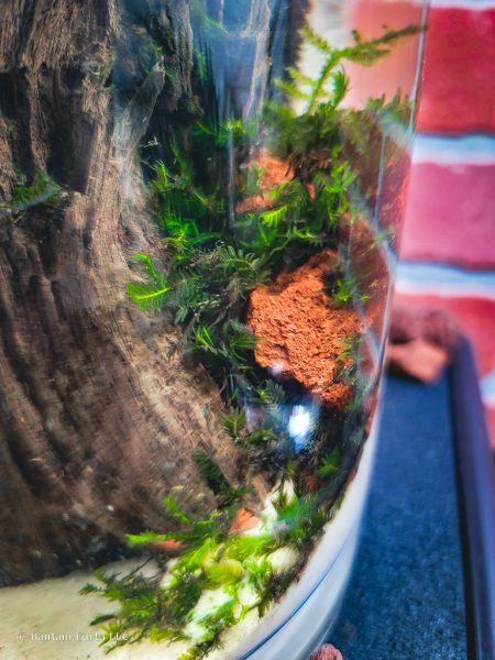 mini aquascape with moss