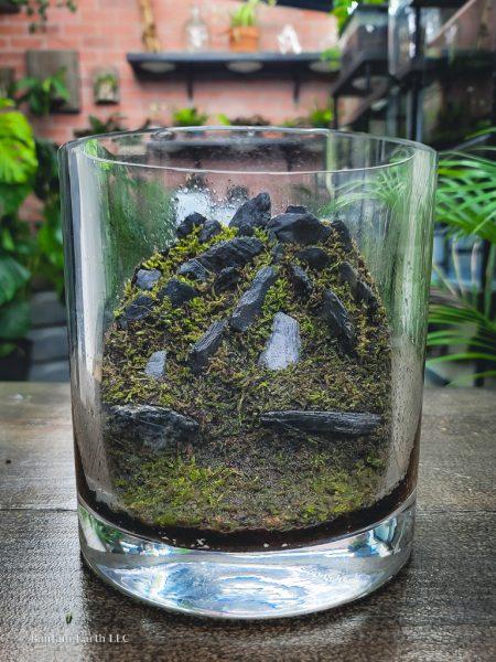 sheet moss in a terrarium