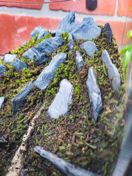 Moss terrarium plants