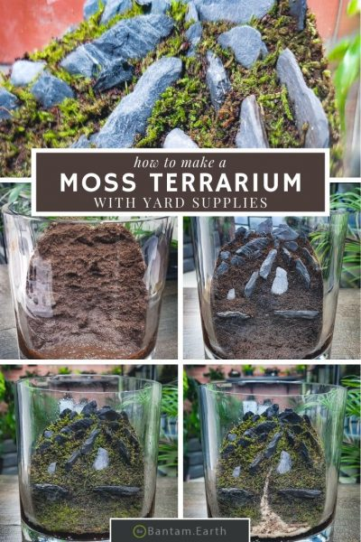 Moss terrarium step by step guide